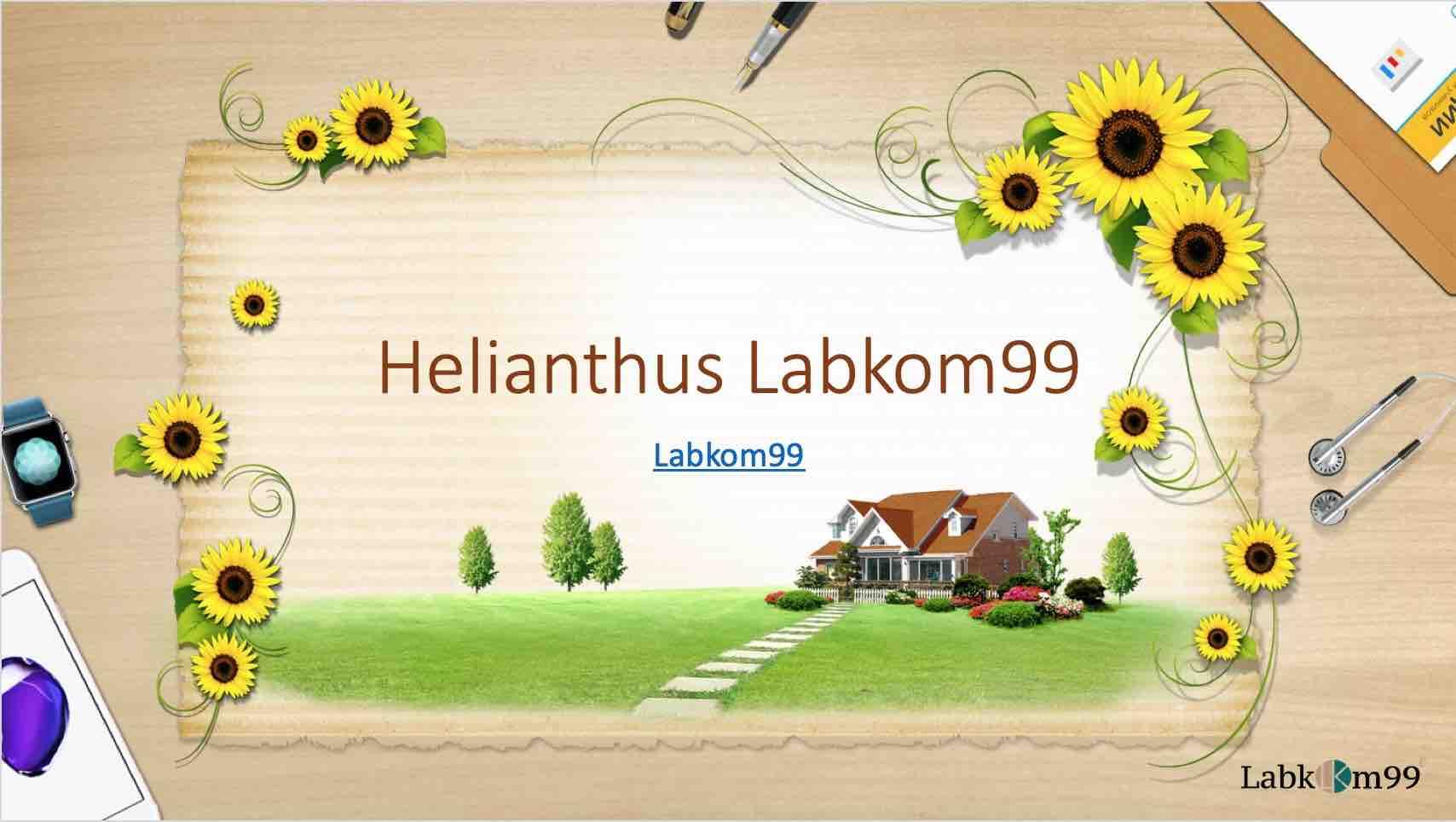 Helianthus - Labkom99